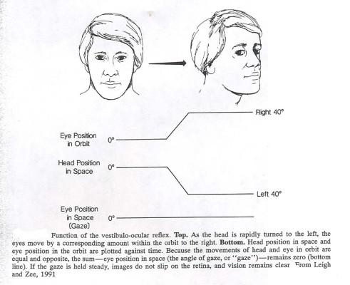 Vestibulo Ocular Reflex