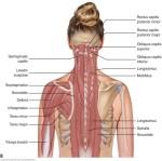 Cervical Spine Anatomy3